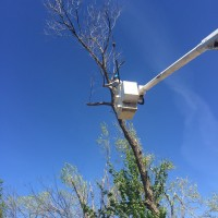 Oklahoma Ice Storm and Tree Care